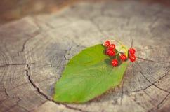 bagas de um viburnum com cores de uma natureza do outono do outono imagens de stock royalty free