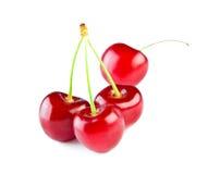 Bagas de uma cereja Foto de Stock