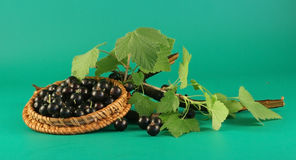 Bagas de uma passa de Corinto preta. Imagens de Stock Royalty Free