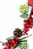 Bagas do cone e do azevinho do pinho Imagens de Stock Royalty Free