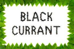 Bagas do corinto preto no fundo branco Fonte do fruto, letras Quadro das folhas Fotografia de Stock Royalty Free