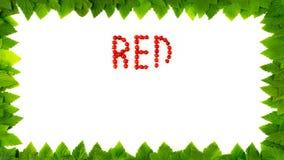 Bagas do corinto vermelho no fundo branco Fonte do fruto, letras Quadro das folhas vídeos de arquivo