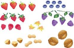 Bagas do fruto Imagem de Stock