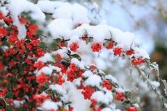 Bagas do inverno Fotos de Stock Royalty Free