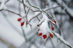 Bagas do inverno em um dia frio gelado fotos de stock