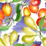 Bagas do mas do cornus do ramo Grupo da ilustração da aquarela Teste padrão sem emenda do fundo Textura da cópia do papel de pare ilustração stock