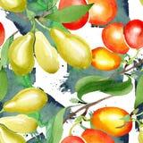Bagas do mas do cornus do ramo Grupo da ilustração da aquarela Teste padrão sem emenda do fundo Textura da cópia do papel de pare ilustração royalty free