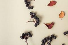 Bagas e folhas de outono pretas em um fundo claro Vista superior Conjuntos de bagas Papel pastel morno claro em uma salpicadura o fotografia de stock