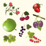 Bagas e frutas Imagem de Stock