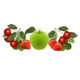 Bagas e frutos brilhantes Fotografia de Stock