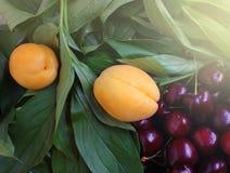 Bagas e frutos do verão dos abricós orgânicos maduros da cereja doce Fotos de Stock Royalty Free