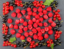 Bagas frescas da cereja, das framboesas, do corinto vermelho e do corinto preto Fotos de Stock
