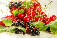 Bagas frescas da cereja, do corinto vermelho e do corinto preto Foto de Stock