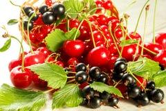 Bagas frescas da cereja, do corinto vermelho e do corinto preto Fotos de Stock Royalty Free