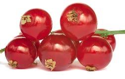 bagas frescas do redcurrant no branco Fotografia de Stock