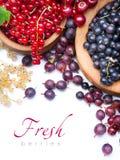 Bagas frescas saudáveis da arte no fundo branco Imagens de Stock