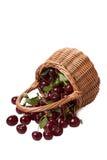 Bagas maduras da cereja imagem de stock royalty free