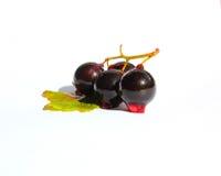 Bagas maduras e deliciosas do verão Fotografia de Stock