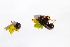 Bagas maduras e deliciosas do verão Fotos de Stock