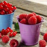 Bagas maduras sazonais Corintos vermelhos e framboesas da colheita Fotografia de Stock Royalty Free