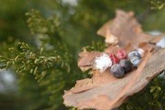 Bagas nas bagas de madeira em bagas das folhas na floresta da baga da floresta imagem de stock
