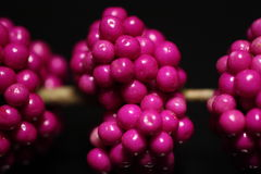 Bagas roxas Imagens de Stock Royalty Free