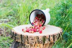 Bagas selvagens na floresta Imagens de Stock