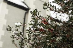 Bagas vermelhas bonitas com coberta da neve fotos de stock