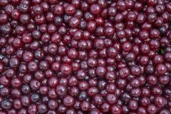 Bagas vermelhas da cereja Fotografia de Stock Royalty Free