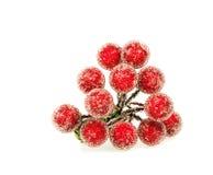 Bagas vermelhas do azevinho foto de stock royalty free