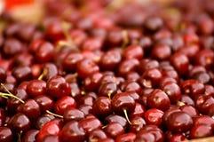Bagas vermelhas maduras Imagem de Stock Royalty Free