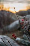 Bagas vermelhas na frente da laranja do cenário do por do sol com as rochas grandes azuis fotografia de stock royalty free