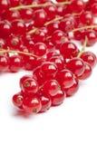 Bagas vermelhas ou passas de Corinto vermelhas Imagens de Stock Royalty Free