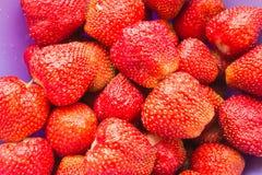 Bagas vermelhas suculentas frescas das morangos com gotas da água em um fim da placa Fotos de Stock