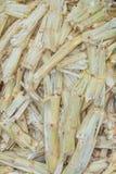Bagassa della canna da zucchero. Fotografia Stock