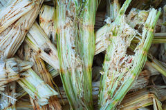 Bagasse de canne à sucre - déchets organiques photographie stock