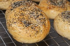 Bagel toasted with seeds royalty free stock photos