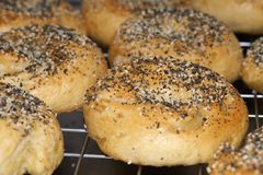 Bagel toasted with seeds stock photography