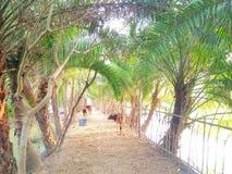 Bagerhat孟加拉国美好的孟加拉国自然 免版税图库摄影