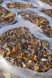 Bagged Autumn Leaves Royalty Free Stock Photo