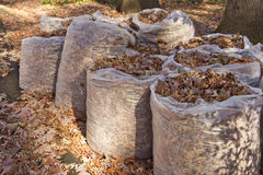 Bagged Leaves Royalty Free Stock Photos