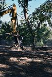 Bagger benutzt, um Baum oben zu graben stockfotografie