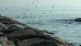 Bagger Working im Meer Marine Debris Pollution Removal stock video