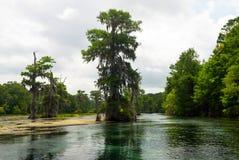 Bagien cyprysowi drzewa w Wakulla rzece, Floryda, usa Obrazy Royalty Free