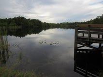 Bagienny jezioro z spokojnym niebem i wodą obraz royalty free