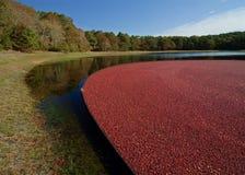bagna cranberry Zdjęcie Stock