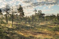 Bagna ranek Obraz Royalty Free