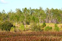 Bagna roślinność Floryda Fotografia Royalty Free