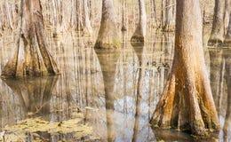 Bagna środowisko Fotografia Stock