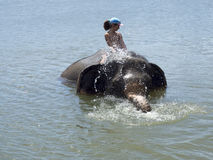 Bagnando con un elefante Immagini Stock